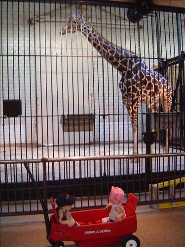 St Louis Zoo. DSC03892-June 14 2005-03.47.36 PM.JPG. Uploaded by Jessica Hoffmann on 6/24/2005.