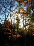 IMG_8664--October 20 2012-03.20.07 PM.JPG