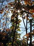 IMG_8665--October 20 2012-03.20.12 PM.JPG